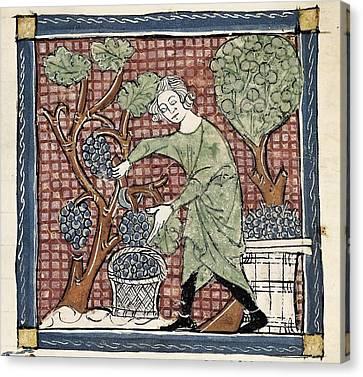 Matfre Ermengau Of Beziers -1322 Canvas Print