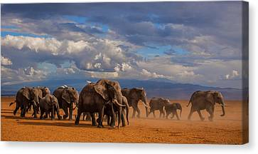 Matriarch On Amboseli Canvas Print by Pieter Ras