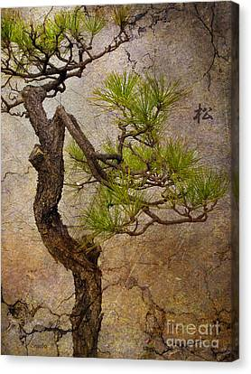 Bonsai Canvas Print - Matsu by Eena Bo
