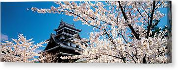 Matsue Castle Cherry Blossoms Shimane Canvas Print by Panoramic Images