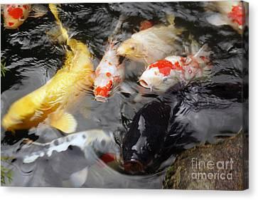 Canvas Print featuring the photograph Matsue Koi by Cassandra Buckley