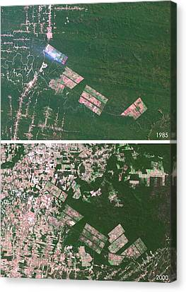 21st Century Canvas Print - Matto Grosso Deforestation by Planetobserver