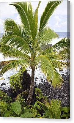 Maui Coast Canvas Print by Jenna Szerlag
