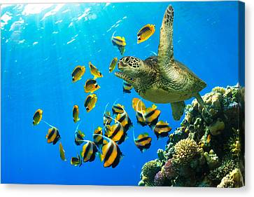 Maui Cruzer Canvas Print by James Roemmling