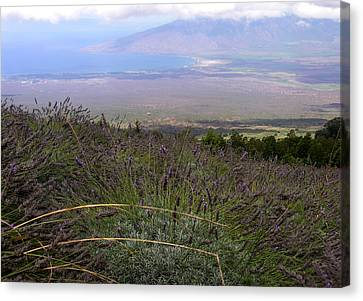 Canvas Print - Maui Lavender Farm by Robert Lozen
