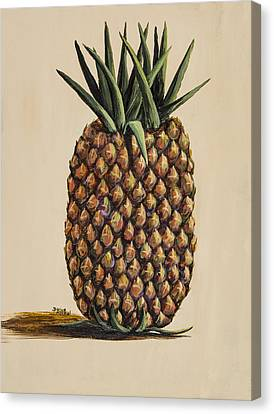 Maui Pineapple 3 Canvas Print