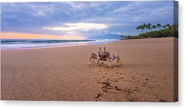 Sunburst Canvas Print - Maui Sand Crab by Hawaii  Fine Art Photography