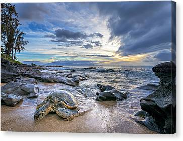 Maui Sea Turtle Canvas Print