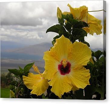 Canvas Print - Maui Yellow Hibiscus by Robert Lozen