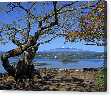 Mauna Kea Volcano Over Hilo Bay Hawaii Canvas Print
