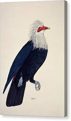 Mauritius Blue Pigeon Canvas Print by Julian Pender Hume/natural History Museum, London