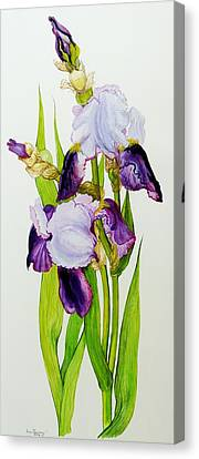 Mauve And Purple Irises With Two Buds  Canvas Print