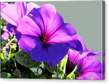Mauve Petunia Trio Canvas Print by Danielle  Parent