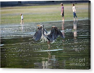 May Day Waders Canvas Print