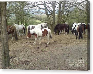 Canvas Print featuring the photograph May Hill Ponies 2 by John Williams