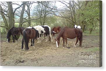 Canvas Print featuring the photograph May Hill Ponies 3 by John Williams