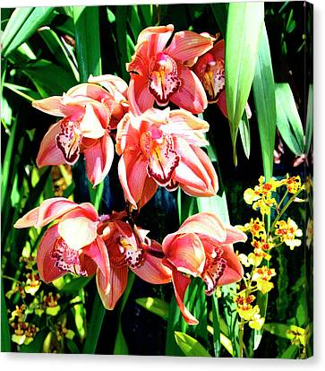 Joy Orchids Canvas Print