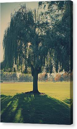 Weeping Willow Canvas Print - Maybe We'll Find It Someday by Laurie Search