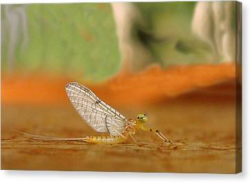 Mayfly Art Canvas Print