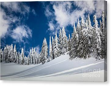 Mazama Trees Canvas Print by Inge Johnsson