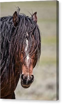 Mccullough Peaks Stallion Canvas Print by Jana Thompson