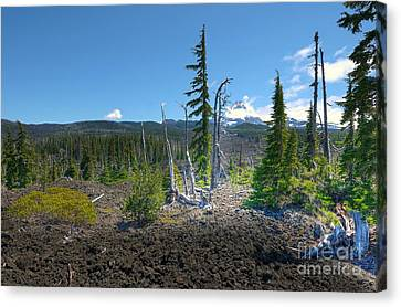 Mckenzie Pass Scenic View Canvas Print by John Kelly