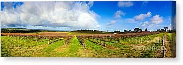 Mclaren Flat Vineyards  Canvas Print by Bill  Robinson