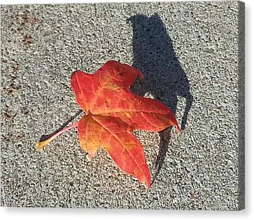Canvas Print featuring the photograph Me And My Shadow by Caryl J Bohn