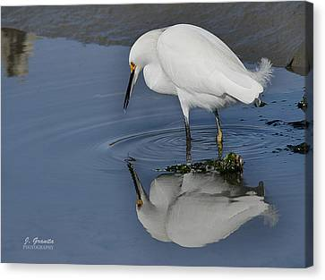 South Carolina State Bird Canvas Print - Me And My Shadow by Joe Granita
