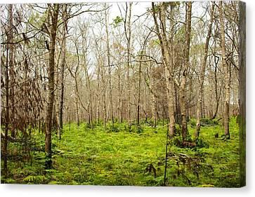 Meadow Canvas Print by Allan Morrison