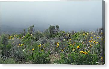 Meadow Fog Canvas Print