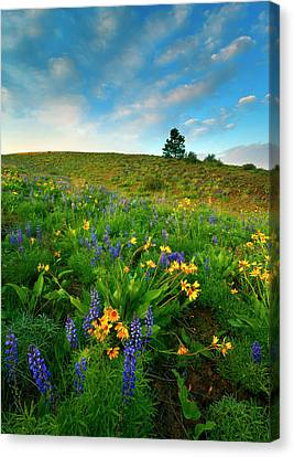 Meadow Gold Canvas Print by Mike  Dawson