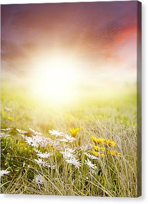 Meadow Canvas Print by Les Cunliffe
