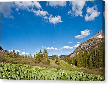 Canvas Print featuring the photograph Meadow Of False Hellebore by Jeff Goulden