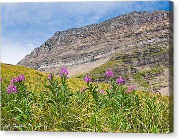 Meadow Of Fireweed Below The Continental Divide Canvas Print