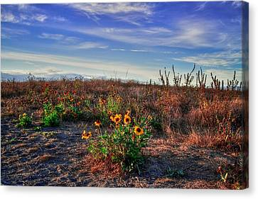 Canvas Print featuring the photograph Meadow Of Wild Flowers by Eti Reid