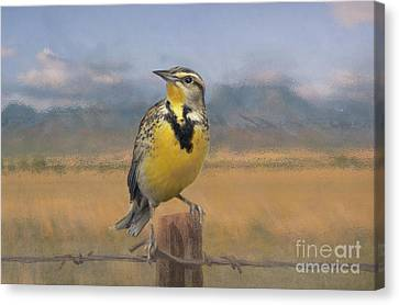 Barbed Wire Fences Canvas Print - Meadowlark On The Fence 1 by Kathryn Yoder