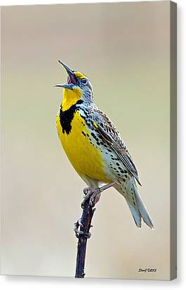 Meadowlark Singing Canvas Print