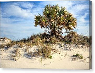 Meanwhile Somewhere In Florida Canvas Print