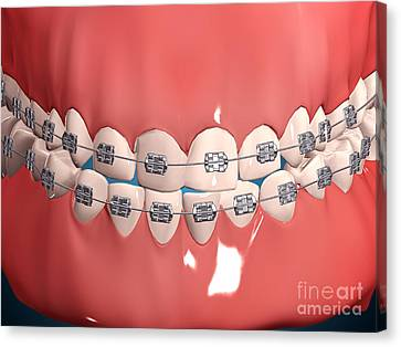 Medical Illustration Of Human Mouth Canvas Print by Stocktrek Images