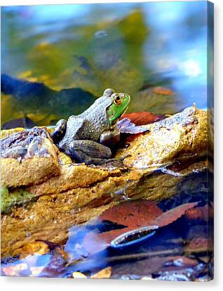Canvas Print featuring the photograph Meditation by Deena Stoddard