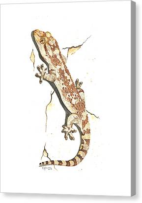 Mediterranean House Gecko Canvas Print