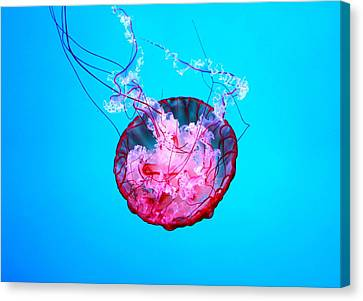 Medusa Canvas Print by Valentino Visentini