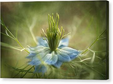 Medussa Canvas Print by Faith Simbeck
