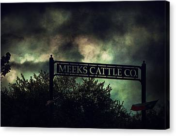 Meeks Cattle Canvas Print