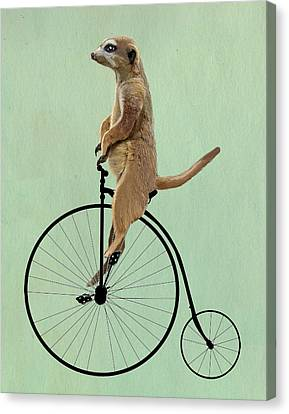 Meerkat On A Black Penny Farthing Canvas Print by Kelly McLaughlan