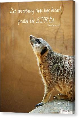 Meerkat Praise Canvas Print by Methune Hively