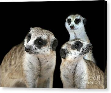 Meerkat Trio Canvas Print by E B Schmidt