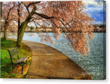 Cherry Blossoms Canvas Print - Meet Me At Our Bench by Lois Bryan