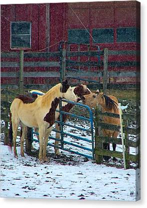 Meeting Of The Equine Minds Canvas Print by Julie Dant